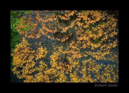 Robert Stahl fall leaves photo.